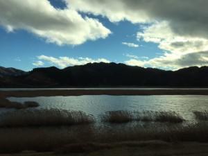 北上川のヨシも相当戻ってきました